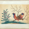 Two pheasant-like birds with flowering plants