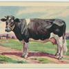 Friesland cow.