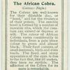 The African Cobra.