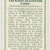 The Kaffir or Crowned Crane.