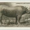 The African Rhinoceros.