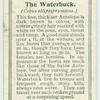 The Waterbuck.