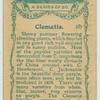Clematis.