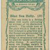 Blue Sea Holly.