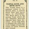 Turtle Dove and Rock Dove.