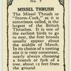 Missel Thrush.