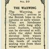 Waxwing.