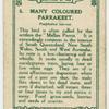 Many Coloured Parrakeet.