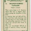 Orange-rumped Tanager.