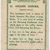 Golden Conure.