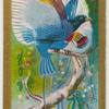 Prince Rudolph's Bird-of-Paradise.