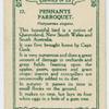 Pennants Parroquet.