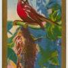 Philippine Sunbird.
