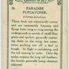Paradise Flycatcher.