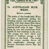 Australian Blue Wren.