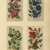 [Four drawings of flowers.]