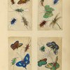 Four drawings of insects.]