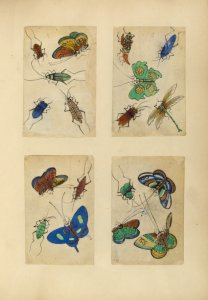 [Four drawings of insects.]