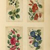 Four drawings of flowers.]