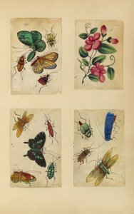 [Three drawings of insects, one drawing of flowers.]