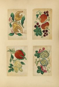 [Four drawings of vegetables a... Digital ID: 1564856. New York Public Library