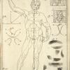 Lamª 1 figª 1ª. [Diagram of proportions of man, front.]