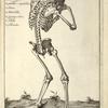 Lam. 6. [Diagram of skeleton, back]