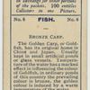 Bronze Carp.