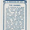 The barbel.