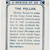 The pollan.