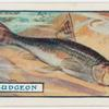 The gudgeon.