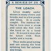 The loach.