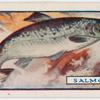 The salmon.