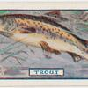 The trout.