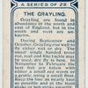 The grayling.