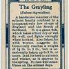The grayling (Salmo thymallus).