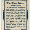 The silver bream (Abramis blicca).