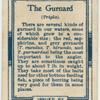 The gurnard (Trigla).