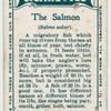 The salmon (Salmo salar).
