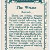 The wrasse (Labrus).