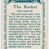 The burbot (Lota vulgaris).