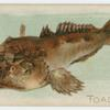 Toadfish.