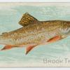 Brook trout.