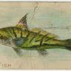King fish.
