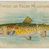 Red throat or Rocky Mountain trout.