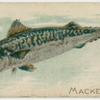 Mackerel.