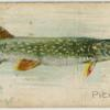 Pickerel.