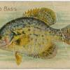 Calico bass.