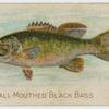 The small-mouthed black bass.