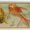 Kingyo (Goldfish)